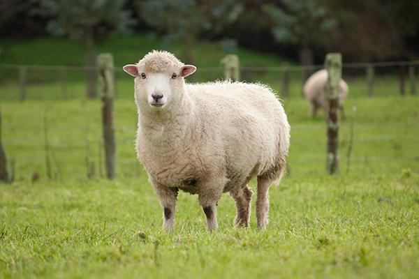 lana merino maglieria tonello